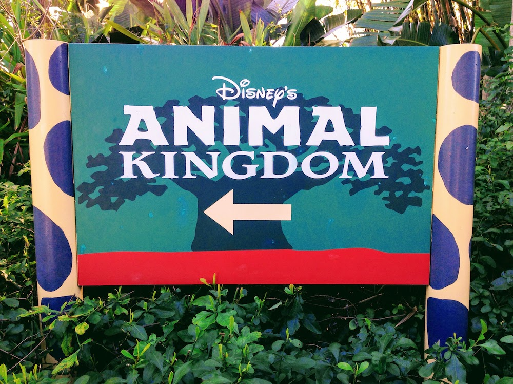 20 Facts For Animal Kingdom's 20th Birthday
